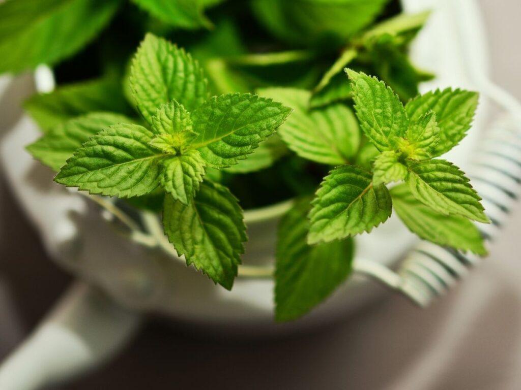 Chá para cólica: 5 receitas caseiras INFALÍVEIS para aliviar as dores